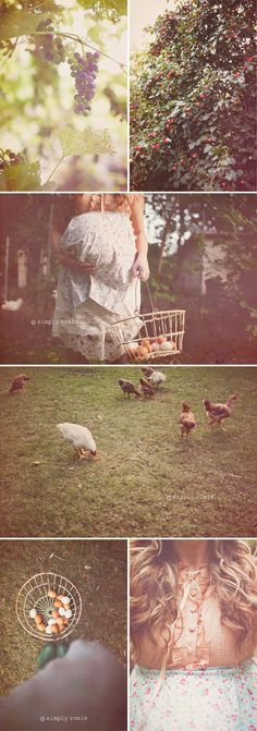 Maybe it's just becuase I had chickens growing up, but I love these chicken/farm maternity photos