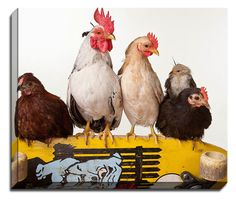 Chicken Fingers by Susan Stone Photographic Print on Canvas