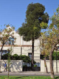 Acacia melanoxylon frente a Escuela Pubica