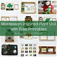 Montessori-inspired plant learning activities and free printables for kids.