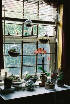 never enough plants.. especially in the window