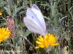 ...una sesión de mariposa blanca.