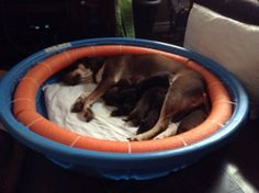 Whelping Box for nursing and pregnant dogs.                                                                                                                                                                                 More