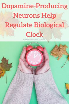Sleep and our circadian rhythm similarly are an innate part of human biology and psychology, shared by people from every culture that has ever existed. According to new research, the neurons that regulate biological clock actions relating to the circadian rhythm and sleep may also play a role in regulating pleasure.