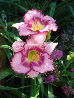 Ballerina Beautiful daylily-check out her other pictures too My Flower, Flower Power, Beautiful Flowers, Lily Garden, Asiatic Lilies, Lavender Roses, Tropical Landscaping, Day Lilies, Trees To Plant