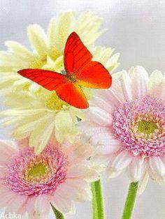 GIFs Hermosas de Mirza BlogSpot® Mariposas encontradas en la web. [Butterfly Animated]