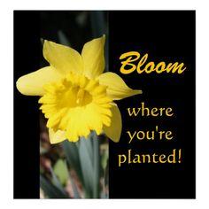 Daffodil Motivational Poster
