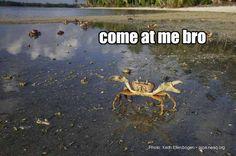 Seven Come At Me Bro Ocean Animals
