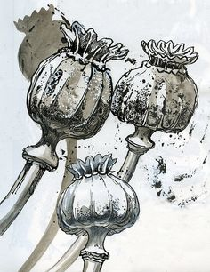 Botanical Drawings, Botanical Art, Botanical Illustration, Watercolor And Ink, Watercolor Paintings, Natural Form Art, Tatoo Art, Art Sketchbook, Art Techniques