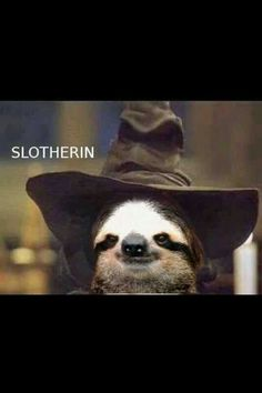 Looking for funny sloth memes? Look no further, here are 10 of the funniest sloth memes out there! Harry Potter Puns, Harry Potter Love, Hogwarts, Slytherin Pride, Slytherin Aesthetic, Funny Animals, Cute Animals, Animal Puns, Happy Animals