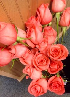 Movie Star roses - gorgeous shade of coral.