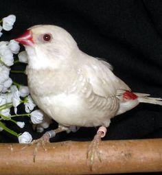 Locanto birds