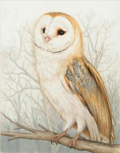 Coosa River Barn Owl Drawing by Heather Mitchell