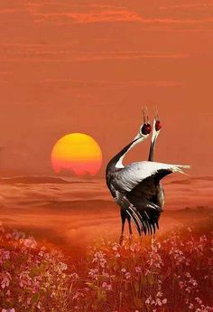 Beautiful Moon, Beautiful Birds, Animals Beautiful, Nature Pictures, Beautiful Pictures, Landscape Photography, Nature Photography, Rare Birds, Tier Fotos