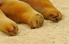 oh my, soooo adorable! #sanctuaryretreats #virtualsuitcase #galapagos