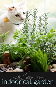How to Make Your Own DIY Indoor Cat Garden: cat grass, catnip, rosemary, Curley/Italian parsley, mint Cat Safe Plants, Cat Plants, Cat Nutrition, Cat Grass, Cat Garden, Garden Care, Cat Enclosure, Reptile Enclosure, Cat Dog
