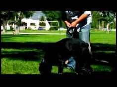 ▶ Dog Training Tips : How to Scent-Train Your Dog - YouTube