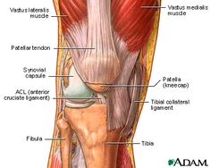 Knee Tendons and Ligaments | ... ligaments and tendons ligaments hold the bone components of a joint in
