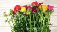 Ορτανσία | Συμβουλές → Φροντίδα → Περιποίηση | eflowers.gr Vegetables, Plants, Vegetable Recipes, Plant, Veggies, Planets