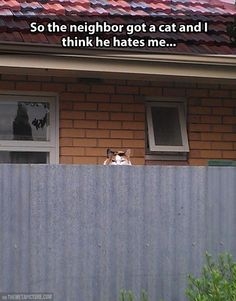 Hahaha! This cat looks just like Waffles and this is what she would do if she was allowed outside!
