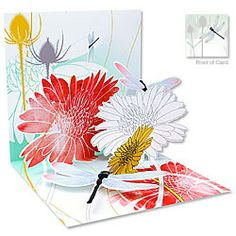 Dragonfly Morning #Birthday [ http://www.thegoodlifestore.com/store/index.php?main_page=product_info&cPath=238&products_id=2525#.U-pBh_ldVUU ]