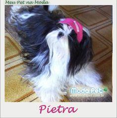 MEU PET NA MODA   A querida Pietra está de volta ao nosso álbum para mostrar como ela gosta de passear: com o boné esportivo! #boné #meupetnamoda