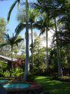 Resort Poolside #ecotourism #Queensland #Australia