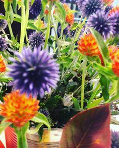 #stimmungsbild #flowers #blümsche