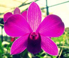 Tipic flower