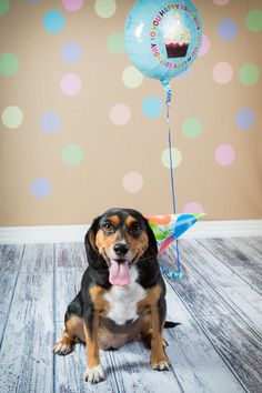 Creative Pet Photography: Making Pet Portraits That Stand Out | Backdrop Express Blog