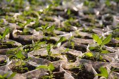 Plantar árboles ayuda a disminuir los efectos de las inundaciones - http://verdenoticias.org/index.php/blog-noticias-medio-ambiente/169-plantar-arboles-ayuda-a-disminuir-los-efectos-de-las-inundaciones