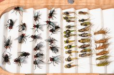 fly box with houseflies