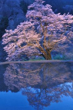 This year's cherry blossom viewing is determined here!  47 prefectures cherry blossoms Roundup