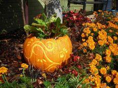 Carved pumpkin planter