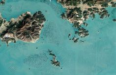 Mesmerising satellite photos show the patterns South Korea's seaweed farms make