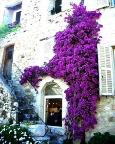 Items similar to Shop Window - fine art altered photography - A small jewelry shop window in France adorned by a large purple flowering vine. on Etsy Purple Flowers, Beautiful Flowers, Beautiful Places, Wall Flowers, Flower Wall, Foto Art, Flowering Vines, Plantation, Shades Of Purple