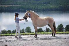 Fjord Horse, Balcony Railing, Judges, Horse Riding, Ponies, Pretty, Photography, Animals, Horses