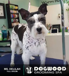 Ms. Delilah is in the house for a Full Groom @ Dogwood Grooming Spa - Knoxville!  Visit our website @ dogwoodgroomingspa.com or Call us at (865) 297-4277 to book an appointment for your pet!  #dogwood #dogwoodgroomingspa #creativegroomer #petstylist #petgroomerknoxville #petgroomer #petgrooming #pets #catgroomer #catgrooming #cats #doggrooming #deshedding #doggroomer #dogs #cityspotz #knoxville #knoxvilletn #knox