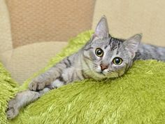 """""""Do Cats Get Measles?"""" and Other Assorted Vaccine Questions"""