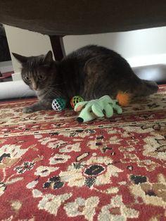 Meep hoarding the toys