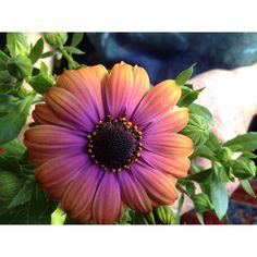Alaska flower