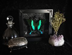Victorian Peacock Swallowtail Butterfly Shadow Box, Butterfly Taxidermy, Framed Butterfly, Real Butterfly, Memento Mori, Gothic Decor, by beyondthedarkveil on Etsy https://www.etsy.com/ca/listing/589069211/victorian-peacock-swallowtail-butterfly