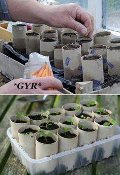 Reciclando los conos de confort puedes realizar semilleros el cual al transplantar los puedes pasar con cono ya que so degradables.