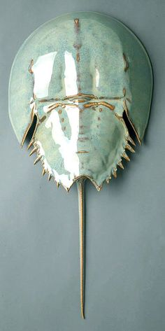 オッさんのTumblr. — exercicedestyle:   Horseshoe Crab by Mark Rea