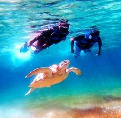 Snorkeling alongside turtles in Cancun - The Westin Lagunamar Ocean Resort Villas #mySVNvacation #cancun