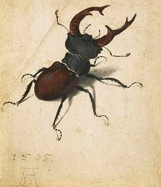 'Stag Beetle' by Albrecht Dürer, 1505.