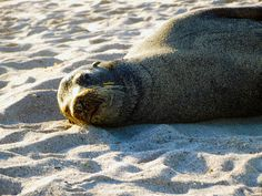Ecuador Volunteer offers a variety of projects in the Galapagos Islands. #galapagos #conservation #volunteer #ecuador #abroad #BeTheChange #volunteerabroad #ecuadorvolunteer #travel