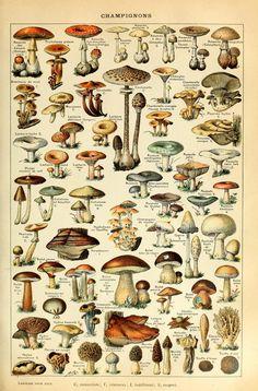 Art Vintage, Vintage Botanical Prints, Vintage Botanical Illustration, Botanical Posters, Vintage Prints, Retro Poster, Mushroom Art, Mushroom Drawing, Mushroom Decor