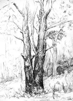 Набросок дерева