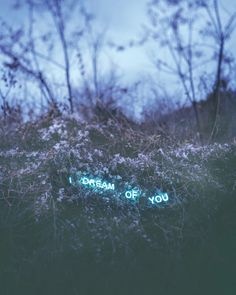 Korean artist Jung Lee creates dreamy, neon text installations in nature. This work is part of the Aporia series, inspired by Roland Barthes's A Lover's Discourse, which contains fragments and musings from a lover's point of view.